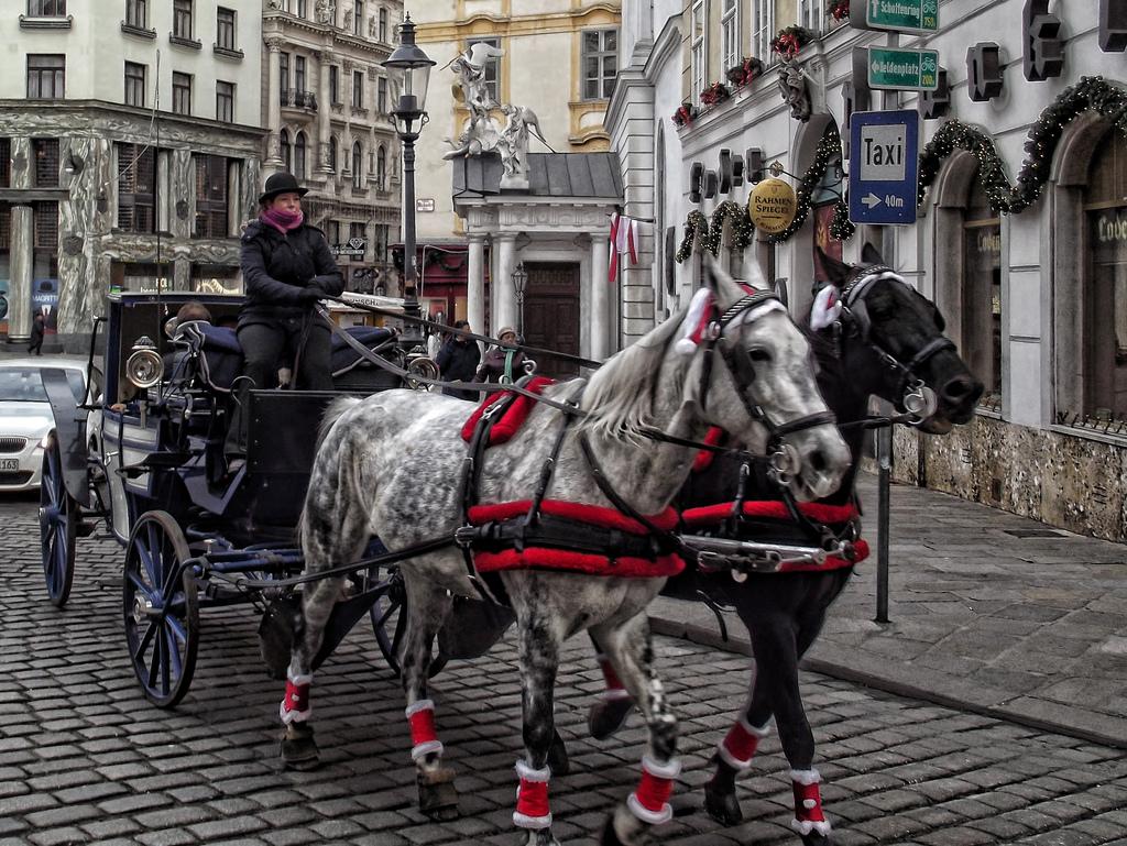 Types of Vienna by Igor